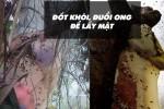 khai-thac-mat-ong-rung-2